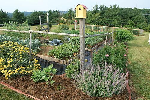 Right corner of garden