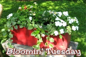 Bloomintuesbutton
