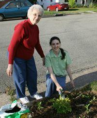 planting vinca