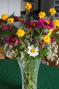Zinnias, Daisies, Sunflower, Yellow Rose of Texas