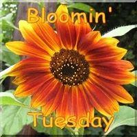 MsGreenThumb Jean's Bloomin' Tuesday