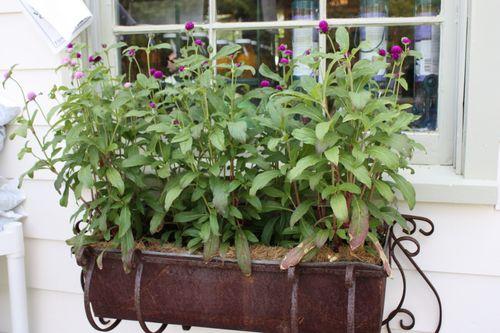 Rusty planter ~ I love it!