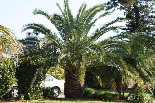 Tree in a Florida yard