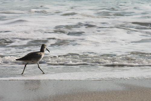 I loved those shorebirds!