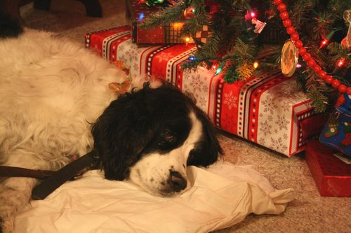 Pepper taking it easy under the tree...
