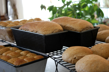 Garlic-herb dinner rolls, hamburger sandwich buns, and loaf bread cooling