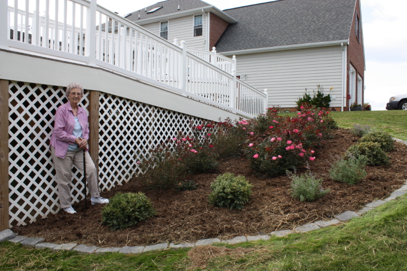 Granny's Knockout Rose bed