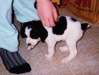 Puppy Pepper