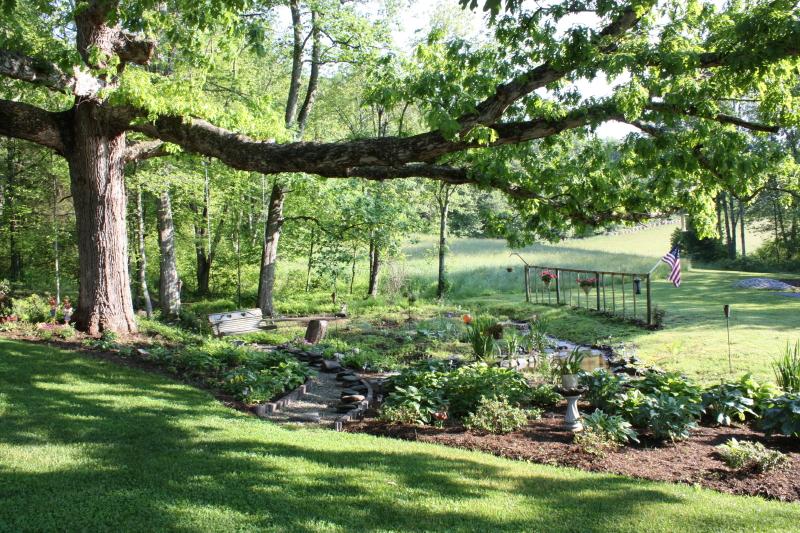 Shade Garden ~ Meadows of Dan