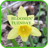 Bloomin' Tuesday ~ 2012