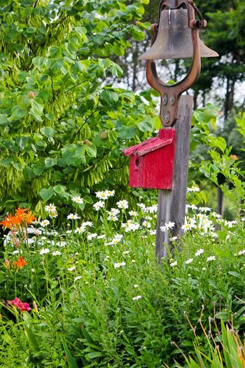 Dinner Bell and Daisies