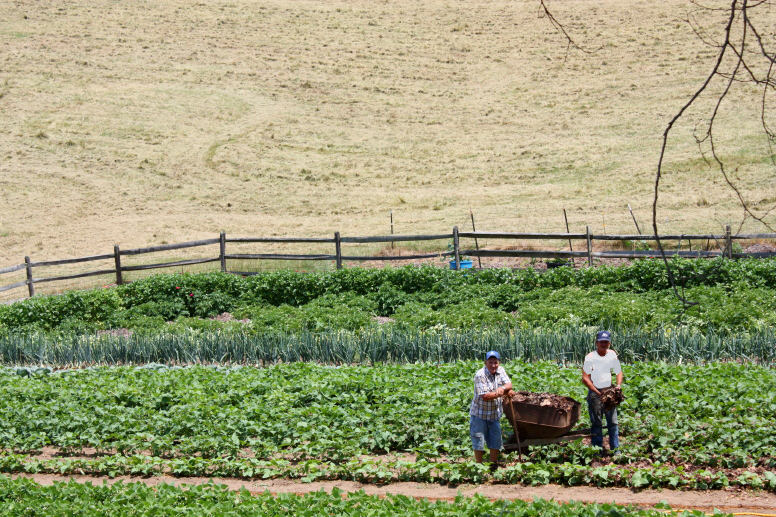 guys in field working