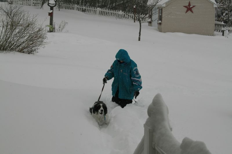 Pepper struggling through the snow