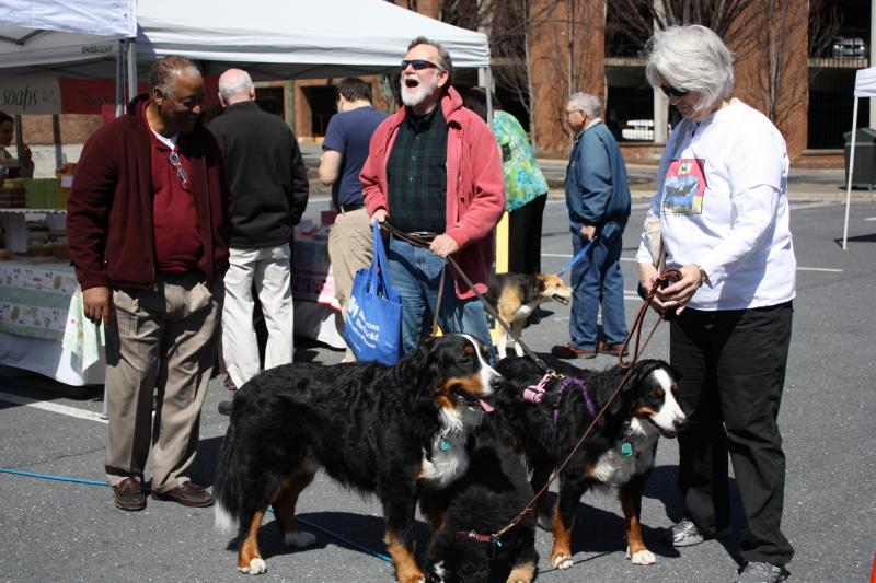 Lotsa dogs at market!