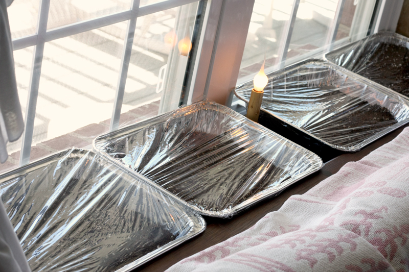 trays of seeds in window