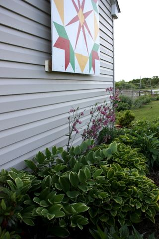 North side of Garden Shed ~ Solomon's Seal and hostas