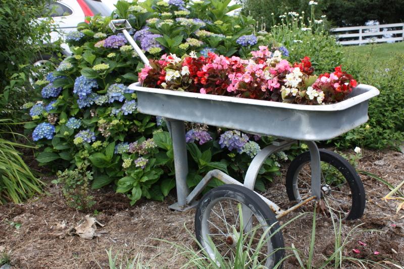 Begonia Wagon