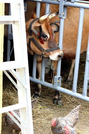 animals on Liberty Hill Farm