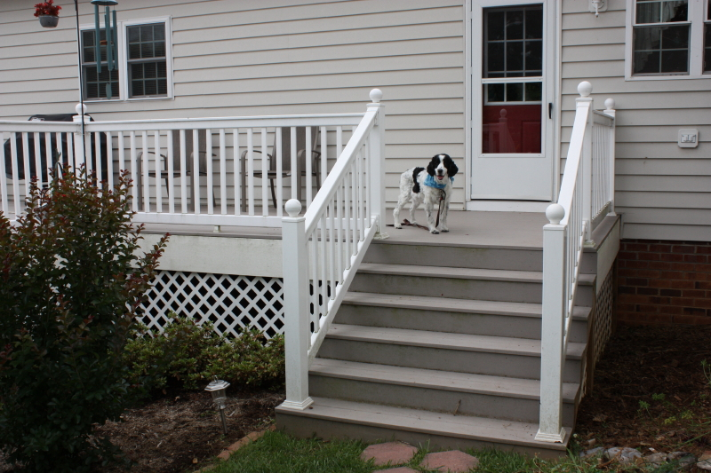 Pepper on back deck