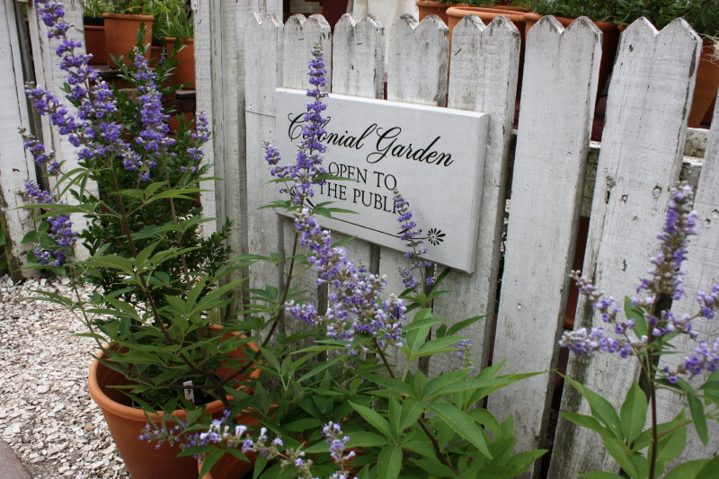 Entrance to Colonial Garden. Vitex tree out front.