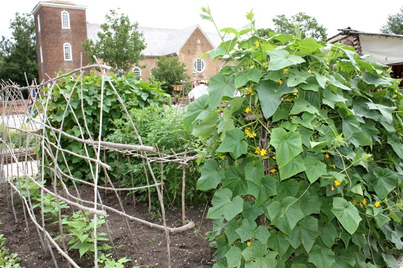 Vitex sticks prepared and waiting for the veggies to start climbing!