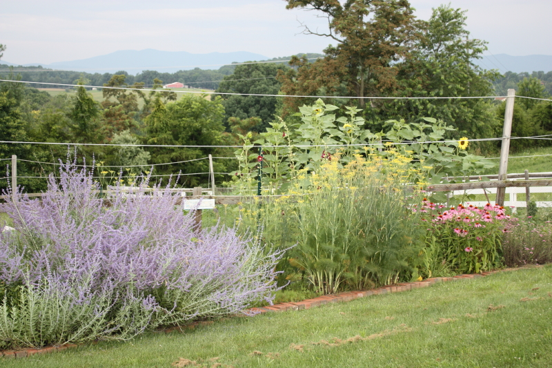 around the garden fence