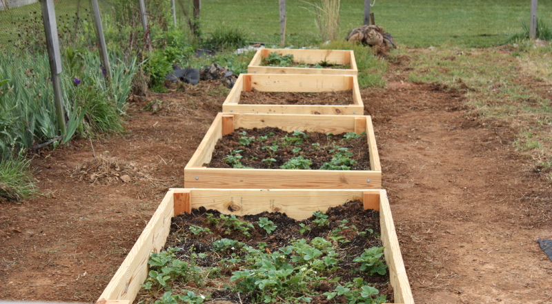 4 new strawberry raised beds. Someone needs to finish weeding!!