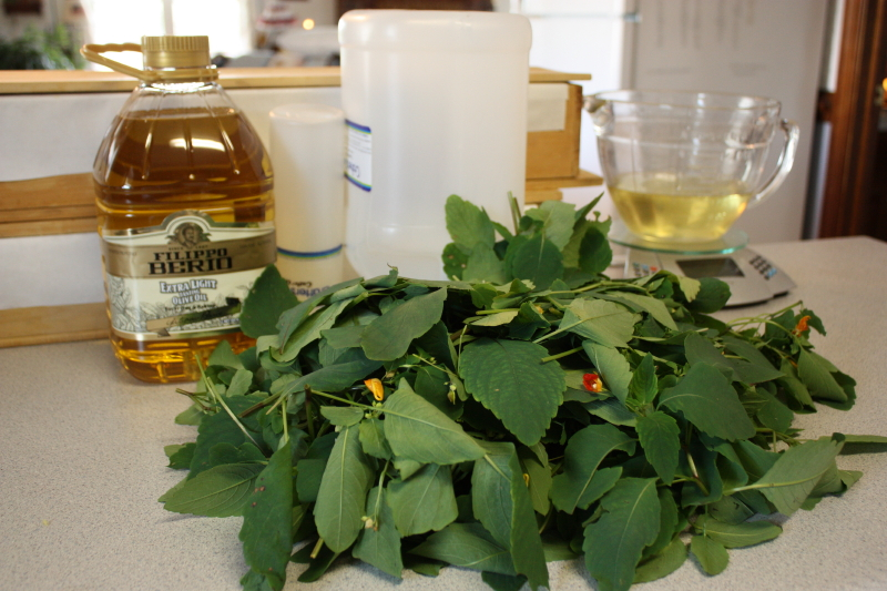 Jewelweed and soaping supplies