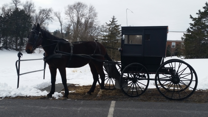 Horse and Buggy in Dayton