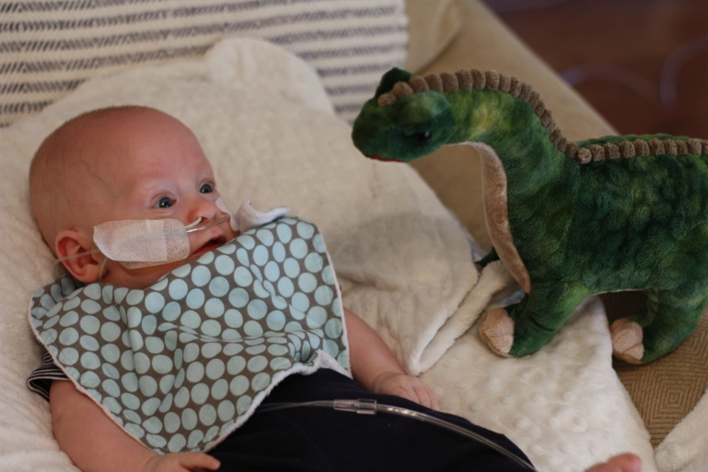 Sweet Andrew and his new dinosaur