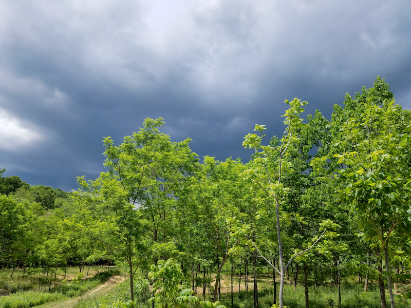 storm clouds over pig forest at Plyface