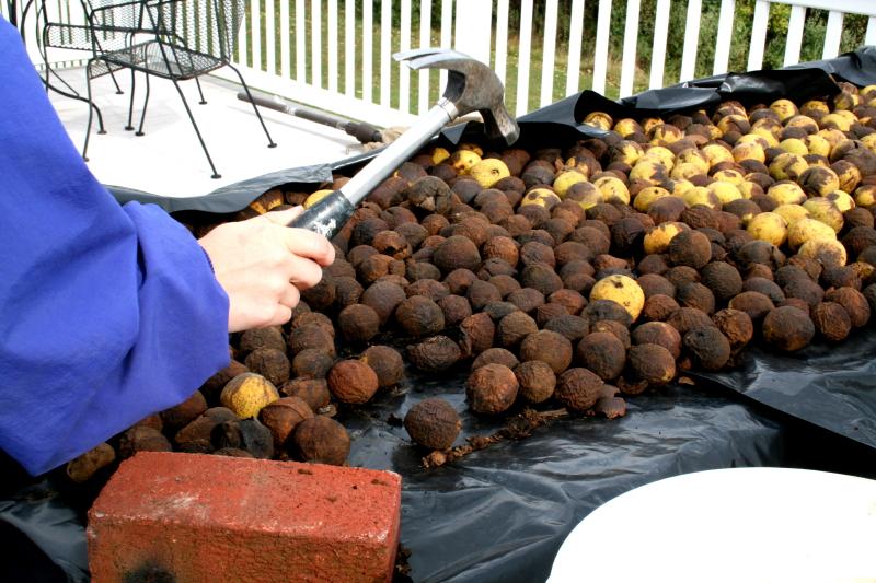 Cracking walnuts