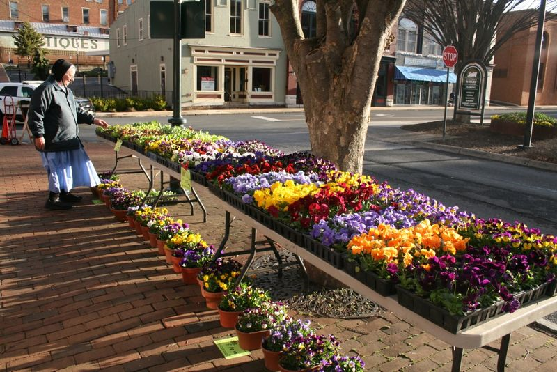 Pansies brightening the sidewalk