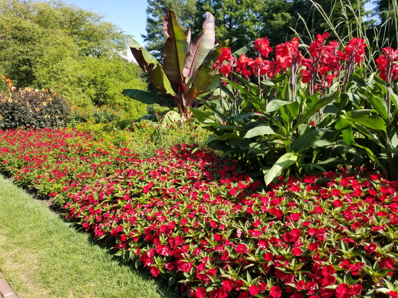 Red flowers on the Flower Walk
