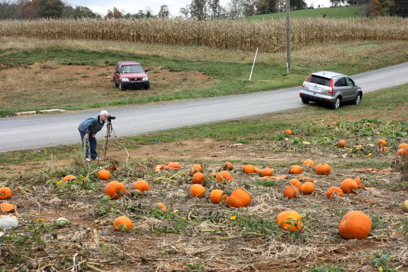 a field of pumpkins