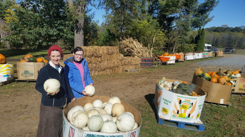 Pumpkin picking for the wedding