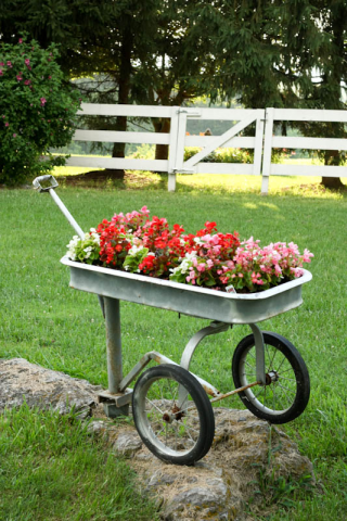 begonias in silver wagon