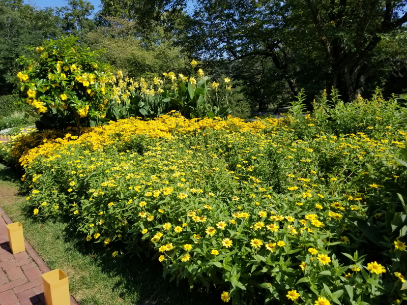 Yellow section on the Flower Walk