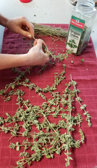 Freshly dried oregano