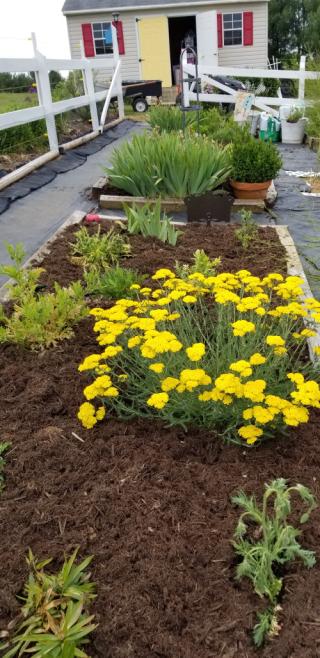 Deb's flower garden