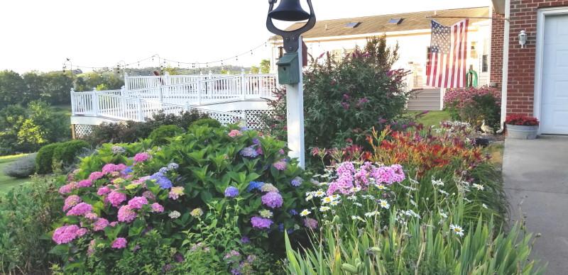 dinner bell flower bed
