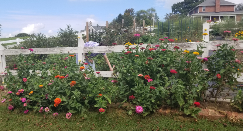 End of summer garden