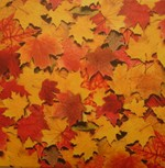 Fall_leaves_1